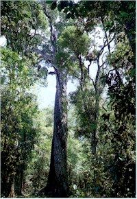 Camping in the Tsitsikamma Forest, South Africa African Tree, Knysna, Many Faces, Beautiful Gardens, South Africa, Road Trip, Southern, Trees, Camping