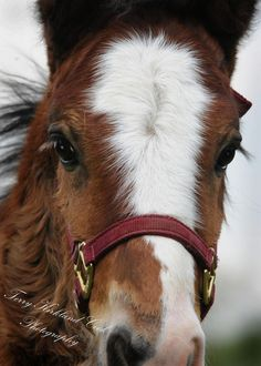 The Sweet Foal Face