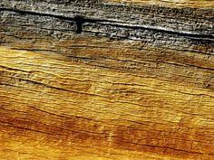 Whitebark Pine Bark