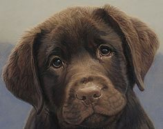 Google Image Result for http://www.puppy-4-sale.net/brown-lab-puppy.jpg