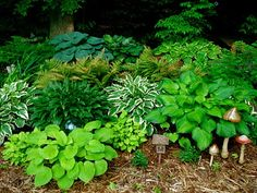 Watch the evolution of a landscape from boring backyard corner to vibrant landscape brimming with hostas and framing a koi pond. Backyard Water Feature, Ponds Backyard, Backyard Ideas, Garden Club, Summer Garden, Landscape Curbing, Bloom Where Youre Planted, Hosta Gardens, Natural Pond