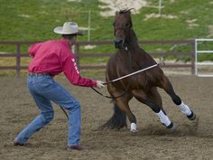 Great Article   clinton anderson | Clinton Anderson longes for respect in the arena.