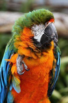 Macaw 3 by Craig Sharpe on 500px
