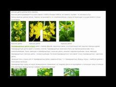 Мужские и женские цветки огурца Пол и урожайность