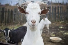 """""""Look life straight in the eyes and show it your best dance moves."""" 