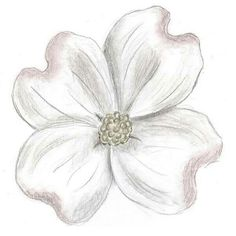 Trendy Ideas For Dogwood Tree Tattoo Art Prints Flower Sketch Pencil, Flower Sketches, Black Watercolor Tattoo, Watercolor Flowers, Painting Flowers, Dogwood Trees, Dogwood Flowers, Black And White Flower Tattoo, Dogwood Flower Tattoos