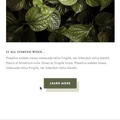 Add this button shadow effect to any Squarespace template & Change colors to match your brand! Minimal Web Design, Color Change, Plant Leaves, Templates, Button, Colors, Plants, Stencils, Template
