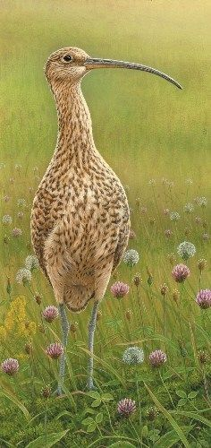 How the sound of a curlew calling led to two new paintings