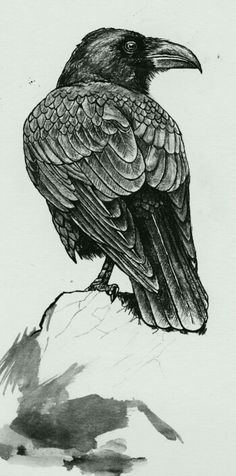 crow illustration with the detail of the feathers for black on black series Rabe Tattoo, Black Bird Tattoo, Tattoo Bird, Crow Tattoos, Raven Bird, Crow Art, Crows Ravens, Bird Drawings, Ink Art