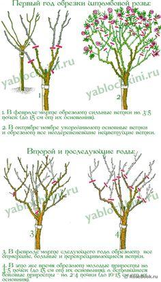 Pruning Fruit Trees, Pruning Roses, Rose Garden Design, Small Garden Design, Farm Gardens, Small Gardens, Grafting Roses, Black Spot On Roses, Rose Trees