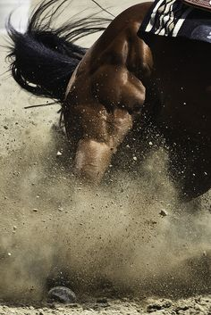 Whoever says quarter horses aren't athletic, this pretty much proves you wrong. Look at the muscle!  Such a cool picture!