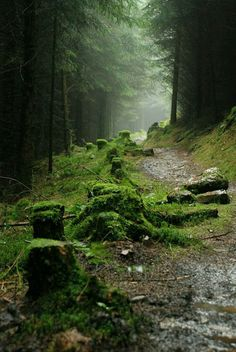 A fan forest park Wales