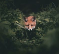 hiding while hunting