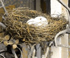 ornate  bird  nest  eggs  warming  photograph by paradisereal, $20.00