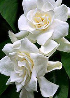 Συμβουλες για οξυφυλλα καλλωπιστικά φυτά