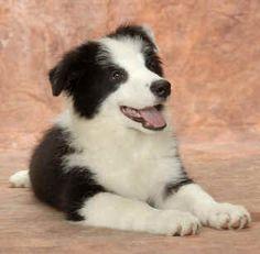 Cute elegant pup has seen something funny