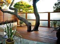 I like those horizontal fence... the deck with the tiles.. and even that opaque glass fence.. very modern looking.