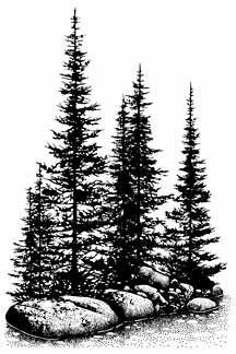 195G Pines & Rocks