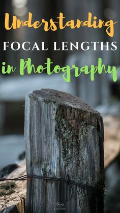 Understanding Focal Lengths and the different effects of each category. Includes experiments showing example photos & tips on which ones to choose to get the right photo! #photography #focallengths #bearswithcameras