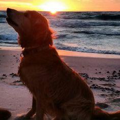 Ace the wonder #Dog