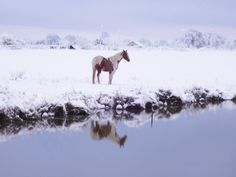 My paint horse by pond last big snow in Texas 2010