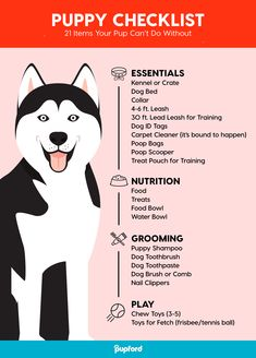 Training your puppy is about building your relationship with your dog as well as implementing boundaries. Be firm yet consistent and you will see extraordinary results in your dog training adventures. Puppy Training Tips, Training Your Dog, Potty Training, Training Classes, Training Collar, Crate Training, Agility Training, Training Academy, Training Videos