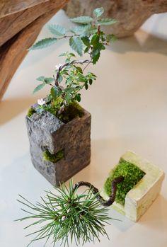 盆栽moss green ikkei×鉢studio.zok Kitowa(樹と環)