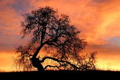 Sky On Fire by Priya Ghose - A stark oak tree silhouette stands out dramatically from a fiery winter sunset. Taken at Arastradero Open Space Preserve in Palo Alto, California.