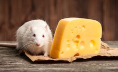 15 Animal Myths That Are Absolutely False | Care2 Causes