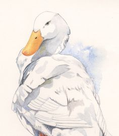 Duck Painting  print of watercolor painting by Splodgepodge, $20.00