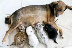 They are all from different species... Now, think how stupid humans are....