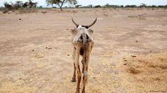 El desierto vuelve a florecer en Etiopía