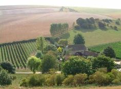 Landscape view of Breaky Bottom vineyard - located at Rodmell, near Lewes