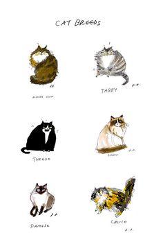 Cat Breeds Fine Art Print Wall Art by jamieshelman on Etsy, $60.00