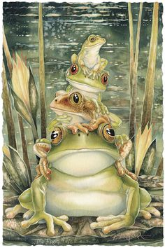 Bergsma Gallery Press :: Products :: Posters :: Insects & Amphibians :: Frogs / Top Frog - 11 x 17 inch Poster Art And Illustration, Frosch Illustration, Illustrations, Funny Frogs, Cute Frogs, Frog Art, Earth Design, Frog And Toad, China Painting