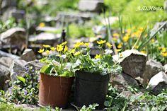kwiaty, dom, ogród, wiosna Dom, Plants, Planters, Plant, Planting