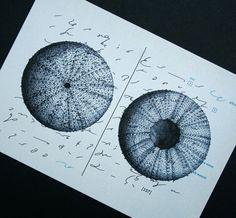 sea urchin designs