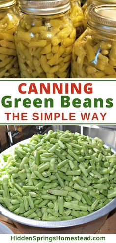 Canning green beans can seem hard with pressure canning. Well take the pressure off and learn how easy it really is to can green beans. Head-space, processing time, mason jars – what does it all mean? Learn step by step… Continue Reading → Pressure Canning Green Beans, Canning Beans, Pressure Canning Recipes, Easy Canning, Home Canning Recipes, Canning Tips, Canning Green Beans Recipe, Pressure Cooking, Can Green Beans