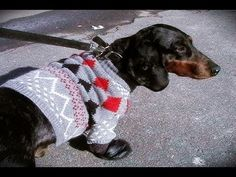 Wa'Ou #2 how to make a dog sweater and boots  I love this.... making Lucy one... Thanks...