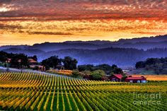 Wine Country Photograph by Mars Lasar - Wine Country Fine Art Prints and Posters for Sale