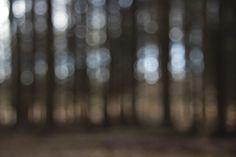 Photo by Tine Bernsen Nature, Forrest, Nordic, Fine Art,  Scandinavia, Meditation, Peace, Mindfullness.