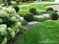 Na zielonej... trawce :) - strona 418 - Forum ogrodnicze - Ogrodowisko