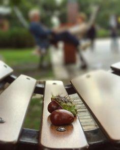 Trendy Fashion Style Women's Clothing Online Shopping - SHOP NOW !         Каштаны 🐿  Buckeyes 🍂  The Buckeye is both a Symbol of Ohio & Ukraine 🇺🇦 #buckeye #buckeyes #ukraine #ohio #buckeyestate #каштан #каштаны #київ #киев #украïна #украина #парк #chair #chairs #design #shevchenko #паркшевченка #парк #осень #autumn #parklife #fallfashion #jesien #sonbahar #otoño #herbst…