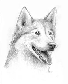 husky drawing - Google Search