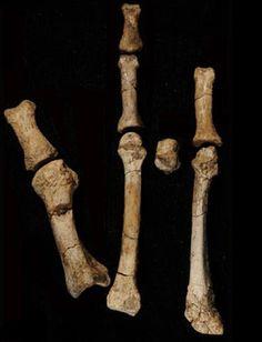 The Burtele Foot Fossil (Afar Region of Ethiopia)