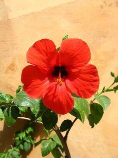 καλοκαίρι  τόσο ώριμο που πέφτοντας προσφέρει  μια πλημμύρα των καρπών, στάρι και μέλι  στον σπασμό του το απόλυτο το αστέρι  καλοκαίρι  μες τα κόκκινα της δύσης του ανατέλλει... Beautiful Nature Pictures, Summer Time, Backyard, Music, Flowers, Plants, Red, Musica, Patio