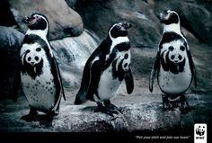 WWF: Penguin
