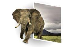 """""""Basta solo aprire una finestra sul mondo, per avere una giusta visione della vita."""" Cit. Alfonso Prunestì  #elefante #photoshop #finestrasulmondo"""