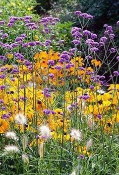 Verbena bonariensis - great combo with rudbeckia