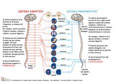vedere și SNC cerebral)